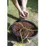 Koš na vodní rostliny čtvercový 19cm