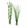 biOrb rostliny velké zelené