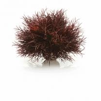 biOrb vodní ozdobná tráva červená