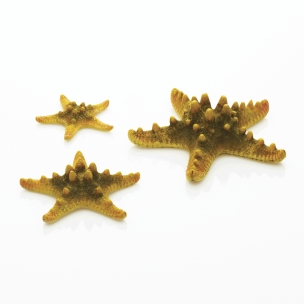 biOrb mořské hvězdice žluté