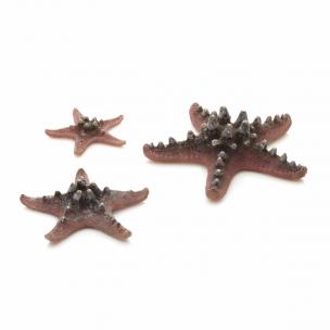biOrb mořské hvězdice růžové