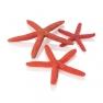 biOrb dekorace mořské hvězdice červené