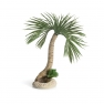 biOrb palma Seychely, velká