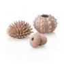 biOrb mořští ježci, přírodní